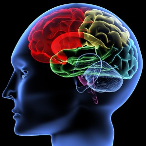 bigstock_Brain_28191692-300x300